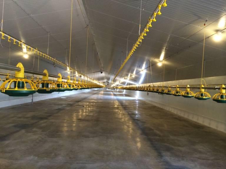 Centro Agropecario Avicola Quintanar Del Rey3