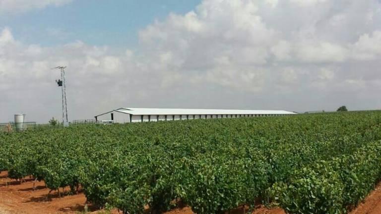 Centro Agropecario Avicola Quintanar Del Rey6